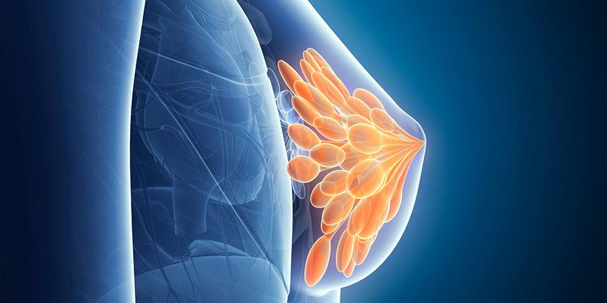 乳腺・甲状腺・内分泌外科 イメージ