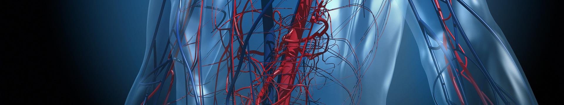 血管外科 ヒーローイメージ